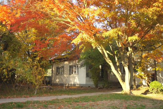 Blick aufs Haus mit herbstlichem Baum davor